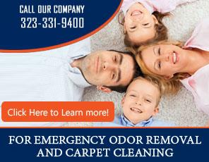 Pet Stain Removal - Carpet Cleaning Brentwood, CA